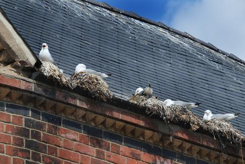 Bird Control - A & W WIndow Cleaning